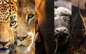 safari en tanzanie : le big five