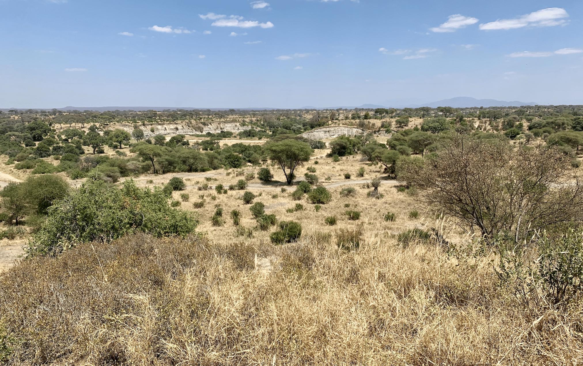 paysages de safari en tanzanie : le parc national de tarangire
