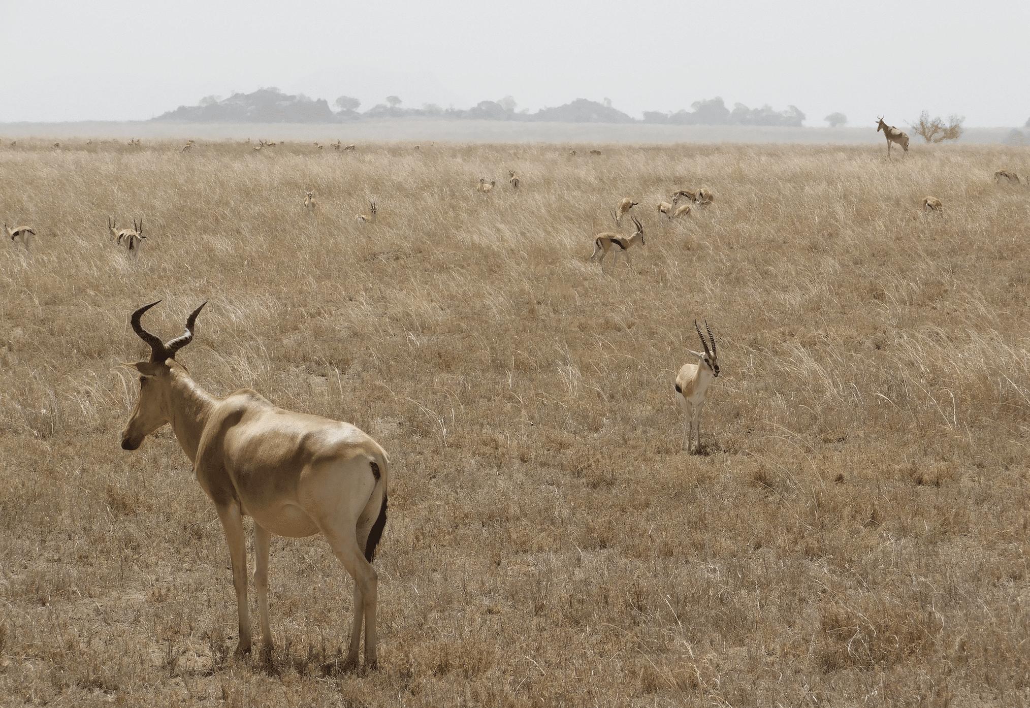 faire un safari en tanzanie : le parc du serengeti