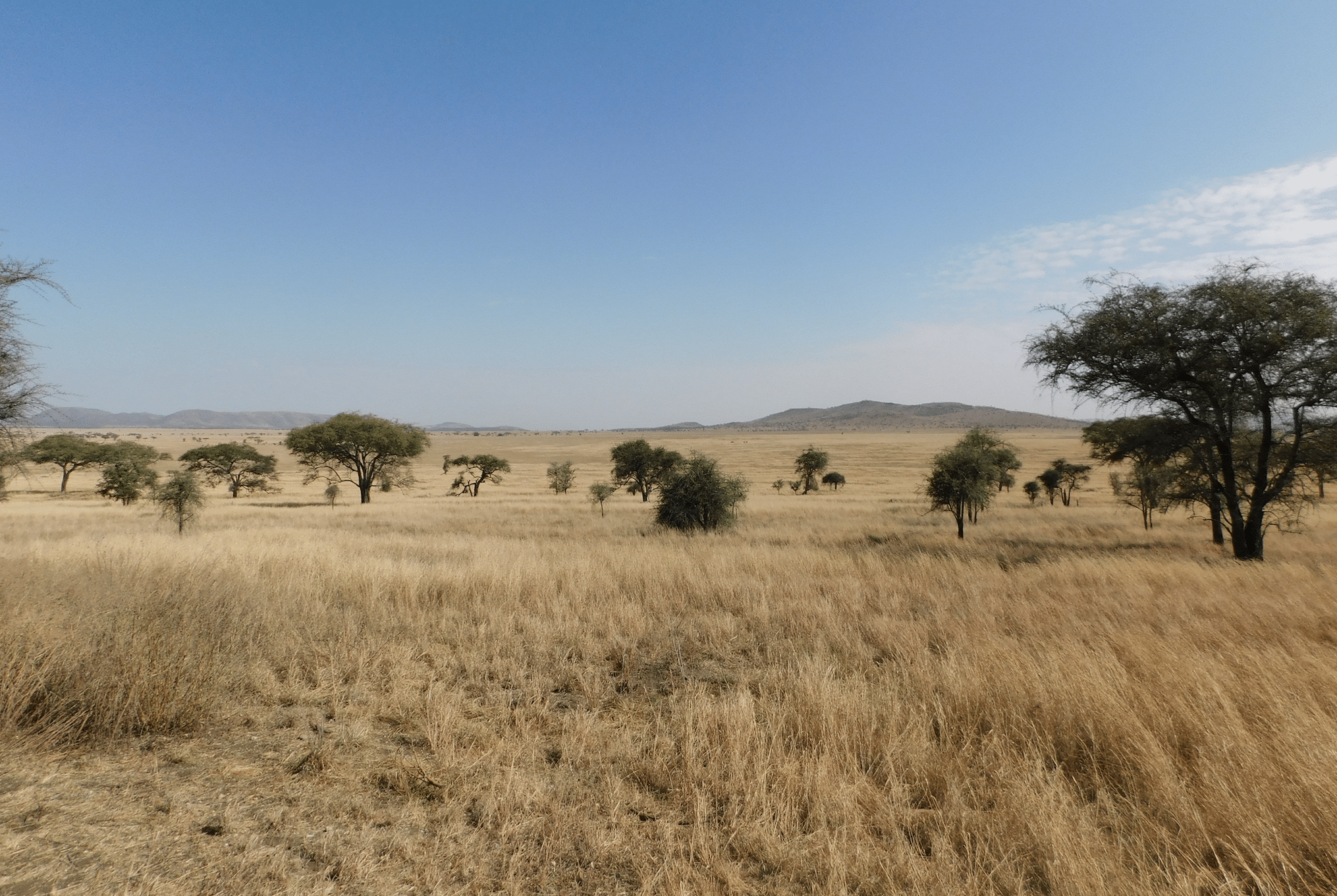 safari en tanzanie : paysages du parc du serengeti