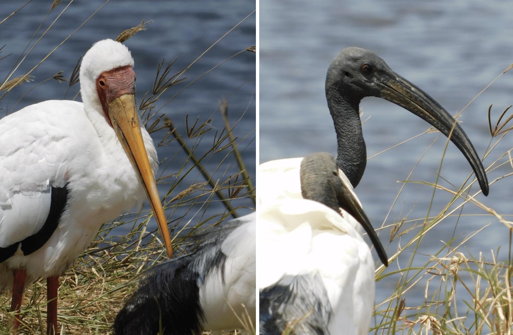 oiseaux dans le cratere du ngorongoro