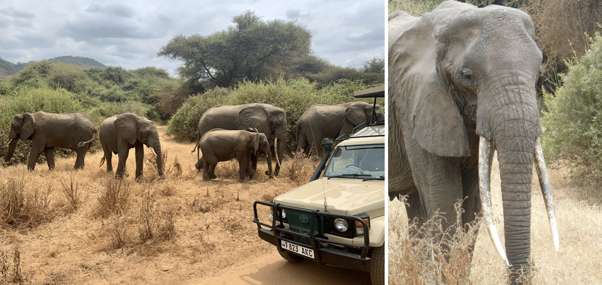 safari en tanzanie : troupeau d'elephants dans le parc du lac manyara