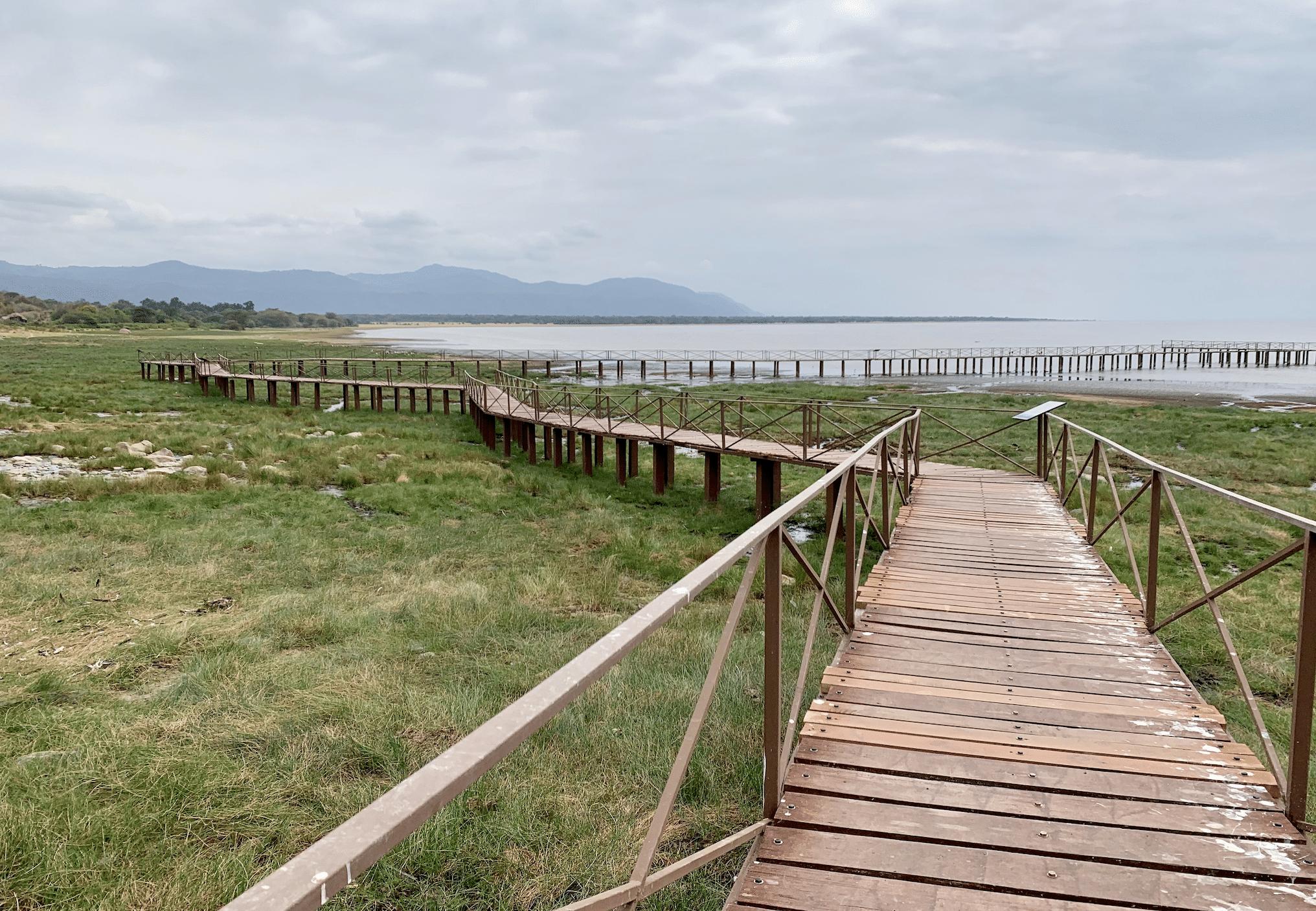 safari en tanzanie : le lac manyara en tanzanie