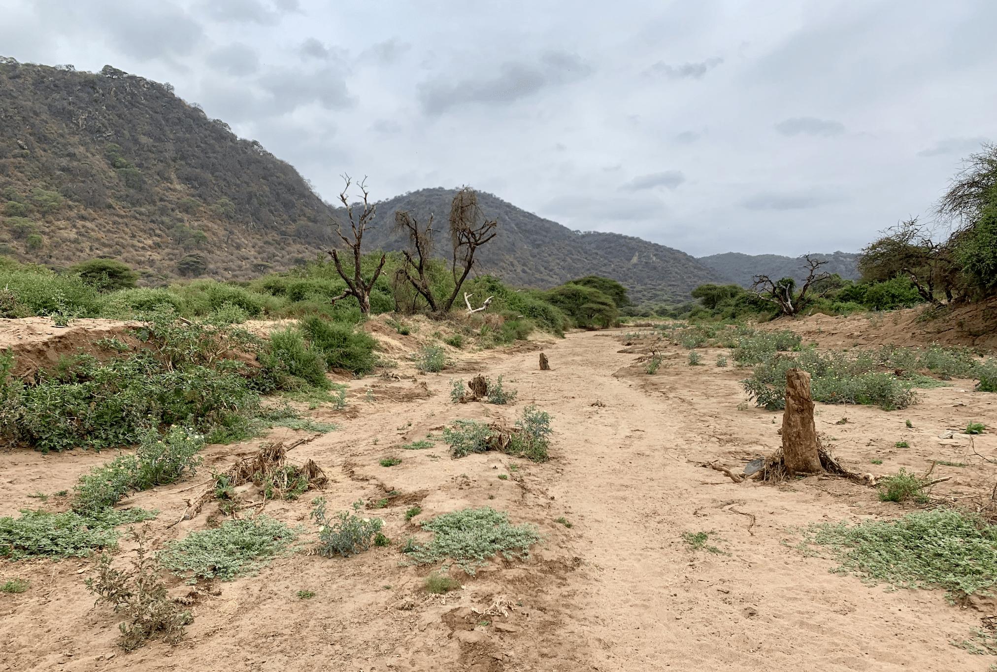 safari en tanzanie : paysage de savane dans le parc du lac manyara
