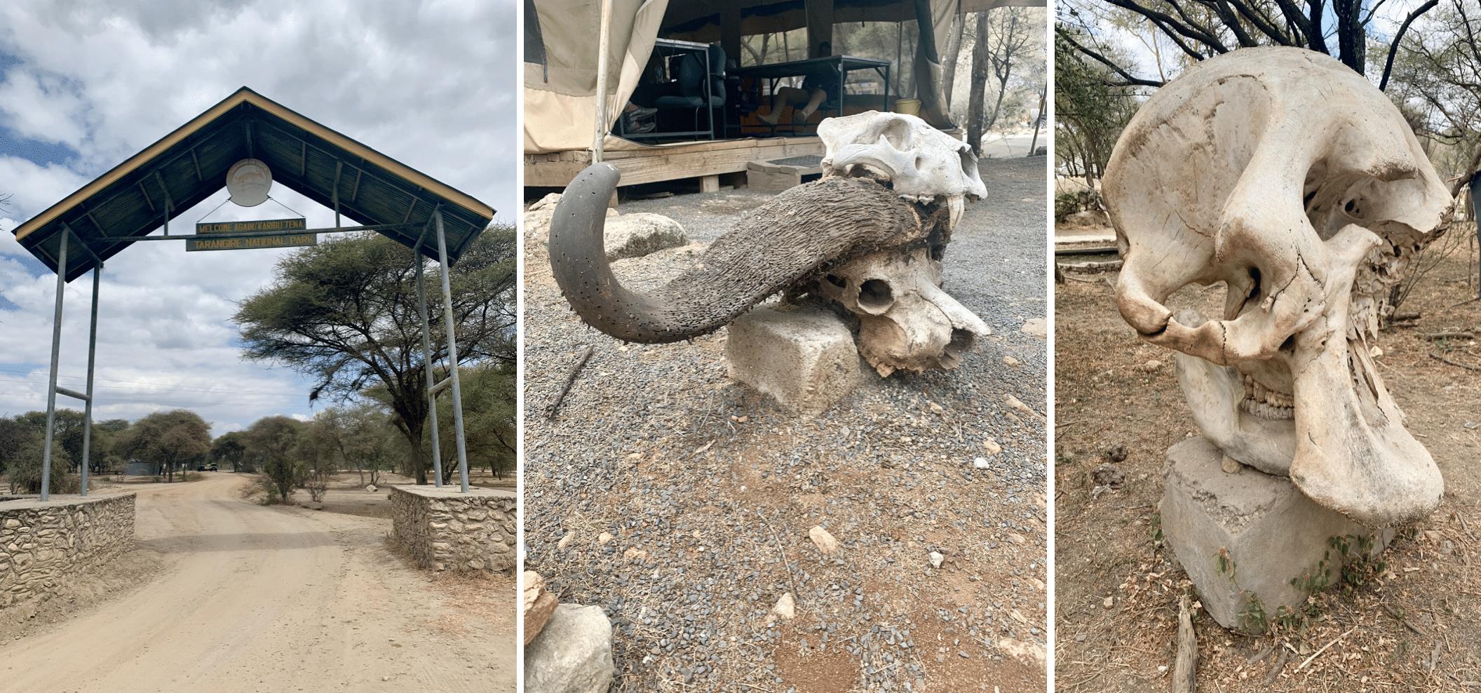 safari en tanzanie : parc de tarangire