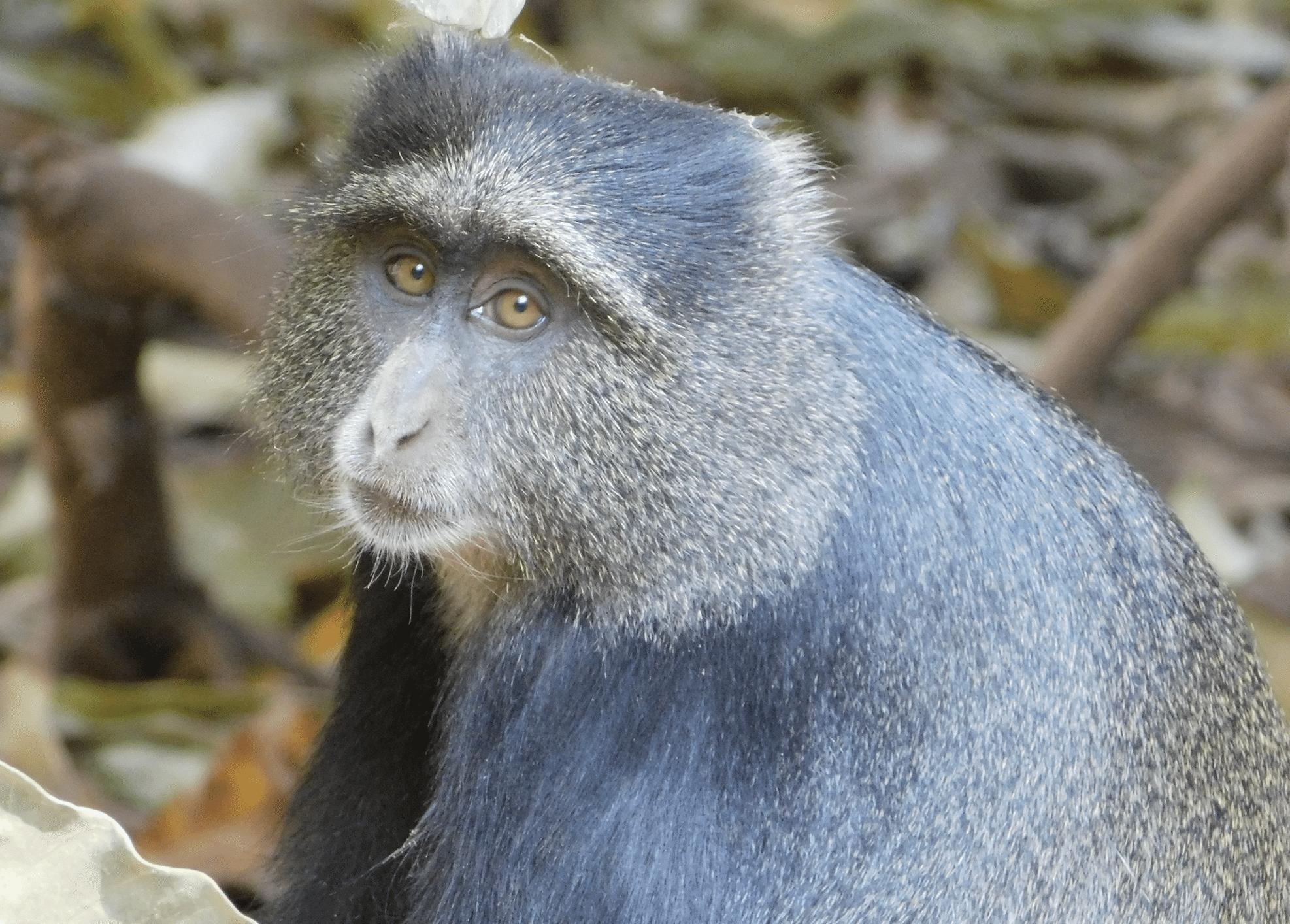 safari en tanzanie : un singe dans le parc du lac manyara
